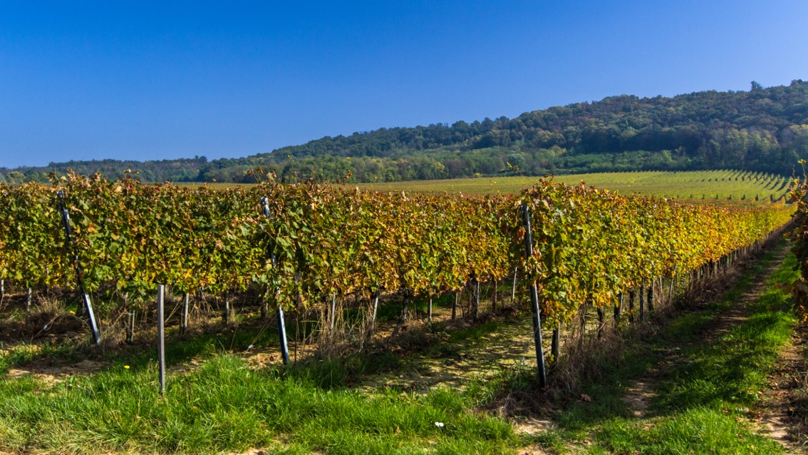 Villány wineyards (photo: Benovics Gábor).